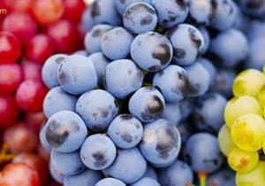 Receitas da TV com uvas, sucos, doces, pratos